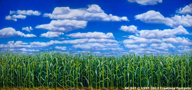 Backdrop SC027 Cornfield 2